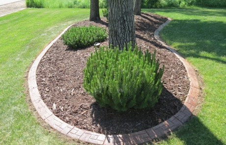 Stone textured concrete landscape curbing around a group of trees in Evansville, IN.